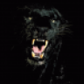 NightPanther